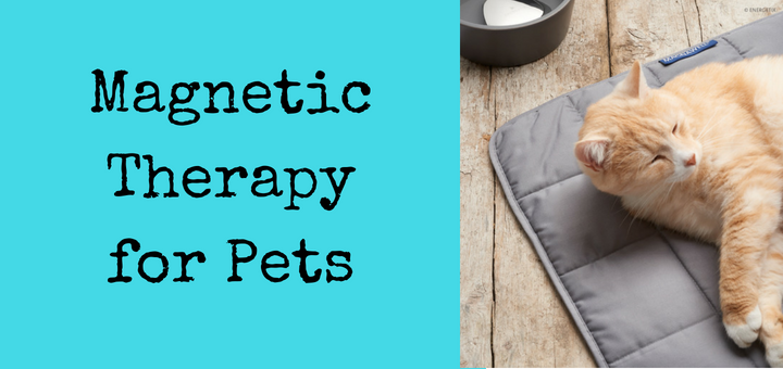 Magnetic Therapy for Pets from Ship Shop Style
