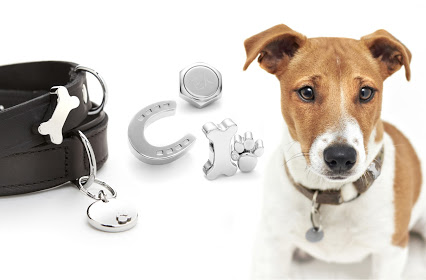 Two black leather dog collars with magnetic collar accessories attached, with dog bone shaped steel accessory and horseshoe shaped accessory and Jack Russel dog wearing collar with magnetic accessories